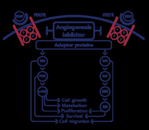 Vorolanib MOA diagram